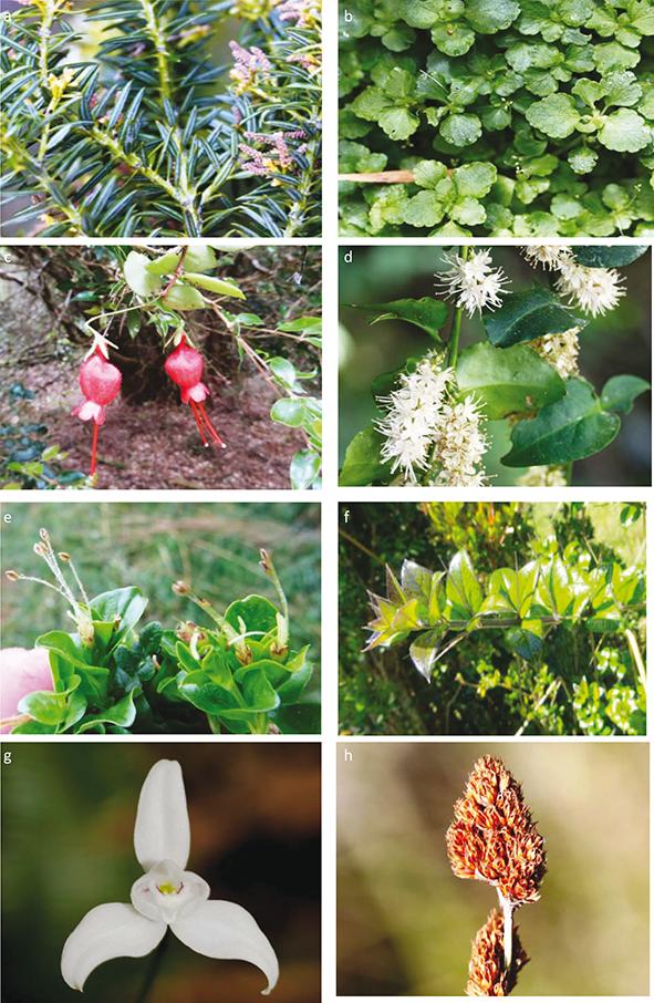 Provisional catalogue of the flora of san ignacio de for Anales del jardin botanico